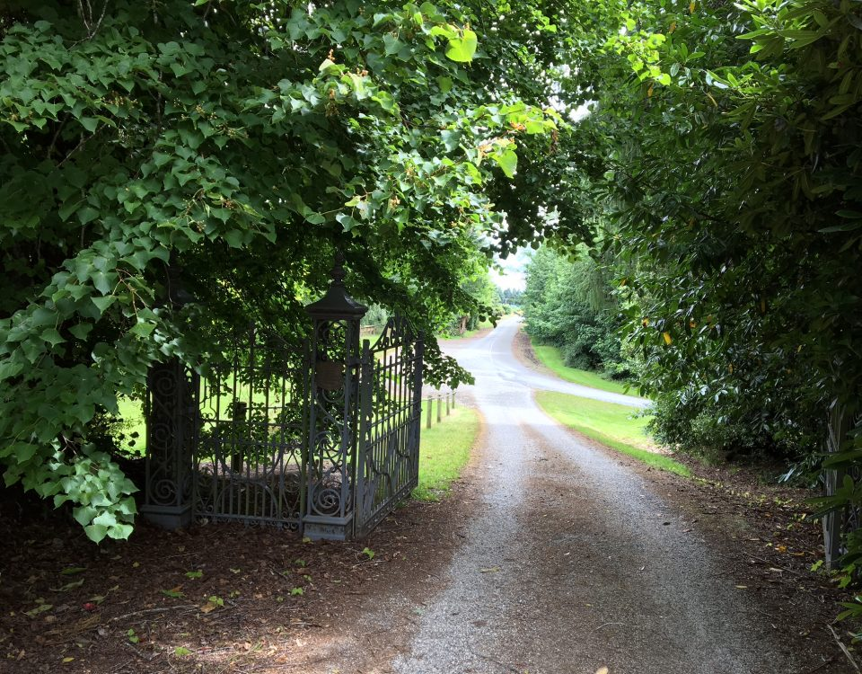 Driveway up through trees and iron gate